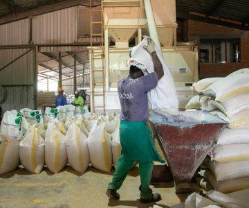 Fabrica de racao (13)